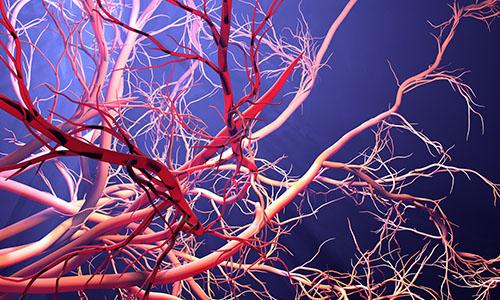 Neuroradiology / Vascular Neuroradiology